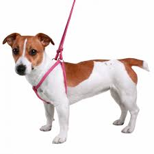 rolled leather step in dog harness and leash set adjustable small miniature breeds pink