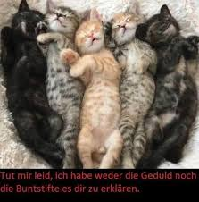 Katzen Bilder Mit Spruchen Booxpw