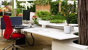 office plant hire Sydney, flower wall hire sydney