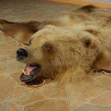 bear rugs for home design ideas and pictures