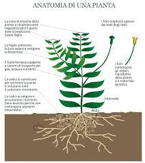 Le piante dacquario