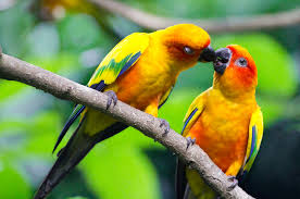 beautiful love birds wallpapers