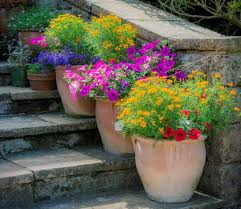 you can create a whole garden in pots