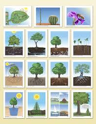 Montessori Geography Charts Impressionistic Charts Botany Montessori Research