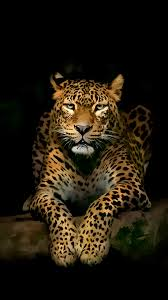 Download and use 30,000+ 4k wallpaper stock photos for free. Free Download Leopard Iphone 4k Ultra Hd Wallpapers Hd Wallpapers 1080x1920 For Your Desktop Mobile Tablet Explore 64 Leopard Wallpapers Snow Leopard Wallpaper Zebra Print Wallpaper Leopard Wallpaper For Bedroom