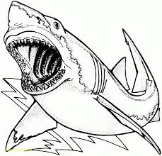 great white shark simple coloring page printable