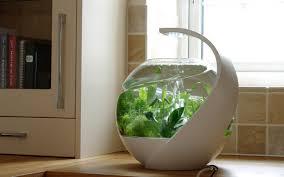 office fish tank. Lifestraw Personal Water Filter Office Fish Tank