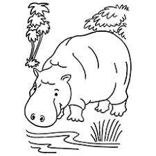 Small Picture Top 10 Free Printable Jungle Animals Coloring Pages Online