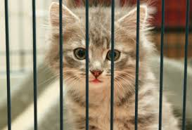 animal shelter pictures.  Pictures Virtual Animal Shelter For Pictures