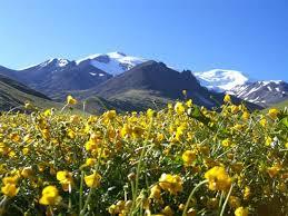Природа растения и животные Северного Кавказа Растительный мир Северного Кавказа характеризуется эндемичностью то есть определенный вид растений существует только в данной местности