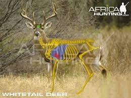 Deer Vitals Chart Index Of Hunting Hunting Vitals