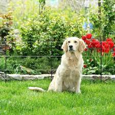safe canine electric fences for dogs