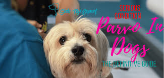 parvo in dogs the guide to alternative treatment critical information