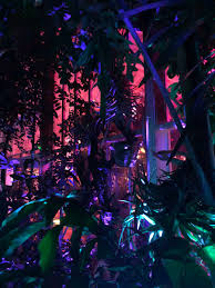 Holiday Lights At Sf Conservatory Nightbloom Twitter Search