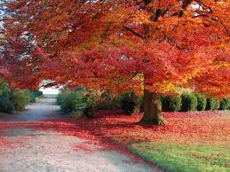 fall nature backgrounds. Autumn Scene Wallpapers (50) Fall Nature Backgrounds 3