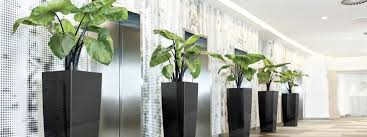 Innovation Interior Office Plants Design To Perfect Ideas