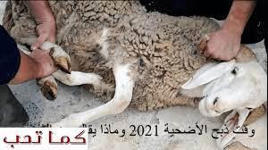 وقت ذبح الأضحية 2021 وماذا يقال عن الذبح وما أفضل يوم لذبحها وأخر يوم - كما  تحب
