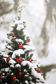 christmas trees decorated outside snow. Plain Decorated Decorated Christmas Tree Outside With Trees Snow R