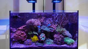 Led Lights For Red Sea Max 250 Red Seas Reefled Lights Are Launching In May Here Is