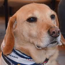 Max Burris - Therapy Dog - Home | Facebook