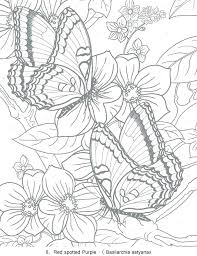 Butterfly Color Page Detailed Butterfly Coloring Pages Page Simple