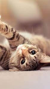 Cute Cat Wallpaper For Phone - Novocom.top
