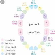 Baby Teeth Chart Babycenter