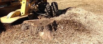 stump grinding faqs