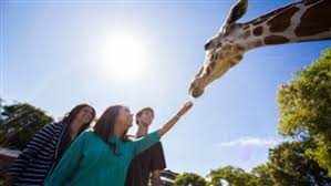 busch gardens serengeti safari. Book A Serengeti Safari At Busch Gardens Tampa Bay C