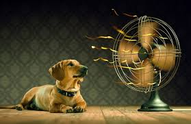 Image result for animals in hot weather photos