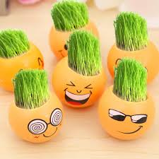office pot plants. 6 pcsset office miniature potted plants green grass desktop planting for baby room or bed pot a