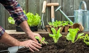 C Gardening 101 Using Compost In Your Garden