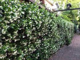 ... Climbing Plants & Living Fence Ideas ...