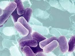Cien billones de bacterias por cada humano