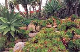 Small Picture Garden Design Garden Design with Succulent Garden Home Design