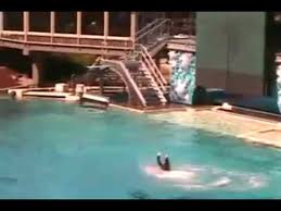 tilikum attack footage dawn. Unique Footage Killer Whale Attacks At Sea World UNCUT VIDEO Inside Tilikum Attack Footage Dawn