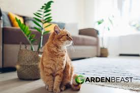 Where can i purchase a coffee plant? Is The Zz Plant Poisonous For Cats Dogs Or People
