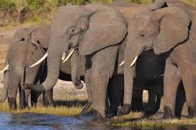 Bildergebnis für johannesburg safari