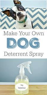 diy dog deter spray helps stop indoor accidents