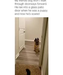 lviy s jog won i walk through doorways forward he ran into a glass patio door when he was a puppy and now he s scared ifunny