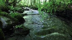 Nature Sounds Of A Forest For Relaxing Natural Soothing Sound Of A