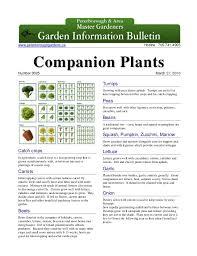 Companion Plants Peterborough Master Gardeners Ontario