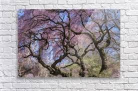 acrylic print acrylic print abstract cherry blossom tree