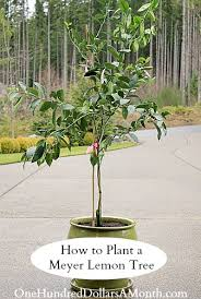 Starting Fruit Trees With Cuttings My Garden Experiment  YouTubeHow To Graph A Fruit Tree