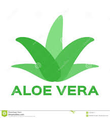 Firma Logo Design Aloe Vera Illustration Template Logo Company Logo Design