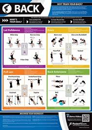 Back Exercises Gym Chart Back Exercise Poster