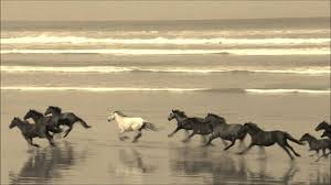 wild horses galloping. Delighful Wild YouTube Premium Throughout Wild Horses Galloping I