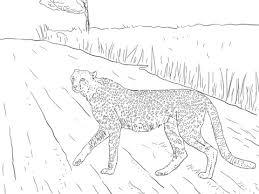 Zuid Afrikaans Jachtluipaard Uit Kruger Kleurplaat Gratis