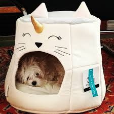 Bright Lights Big Kitty Poster Image Result For Unicorn Cat Bed Unicorn Cat Cats Pets