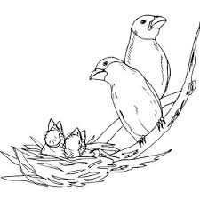 Small Picture Bird Family Live in Bird Nest Coloring Pages Best Place to Color